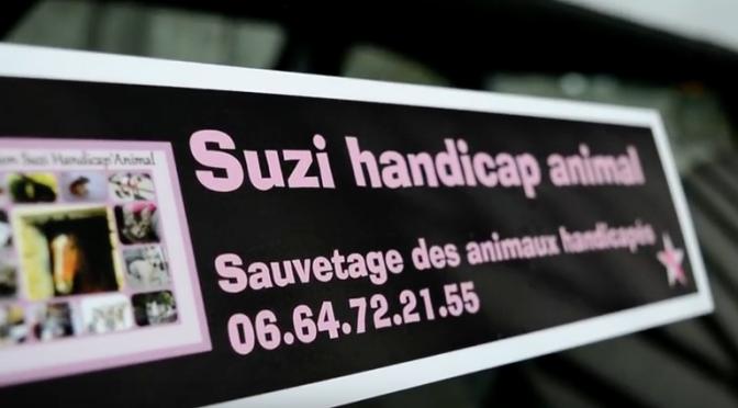 «Suzi Handicap Animal»